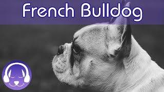 ¡Música para los Bulldogs franceses!