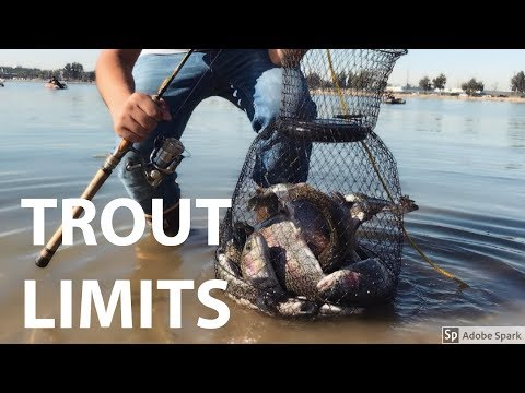Trout Fishing Santa Ana River Lakes 12/29/17 | Fishing for Stocked Trout