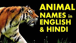 Learn Animals Name in Hindi and English | जानवरों के नाम