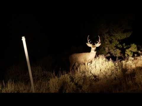 Poachers In The Headlights