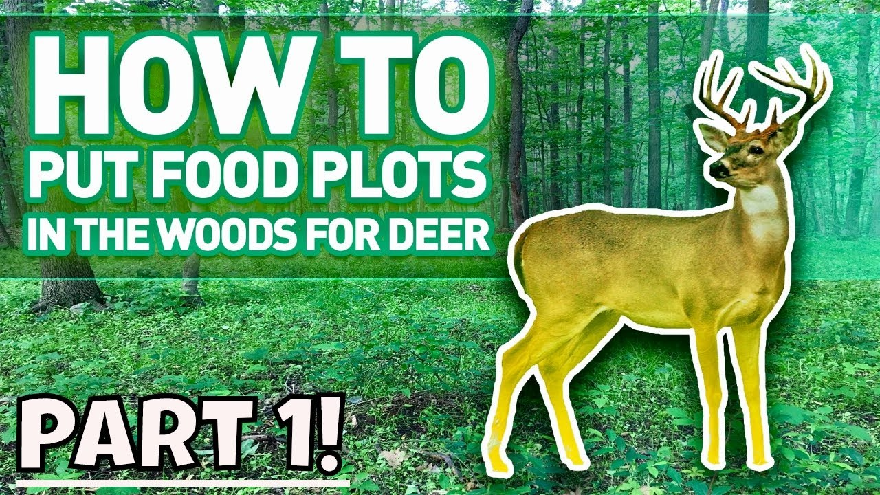 How To Make A Food Plot In The Woods