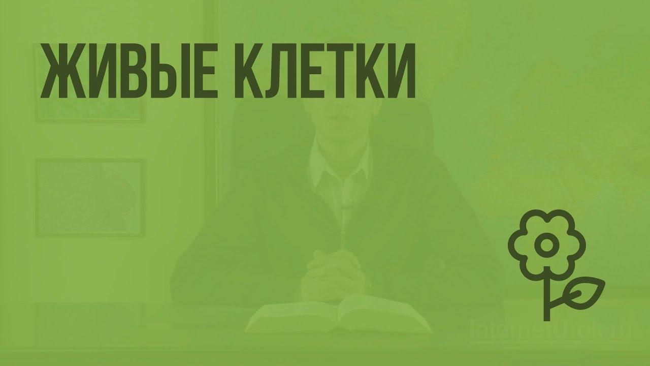 Русский язык 5 класс interneturok.ru