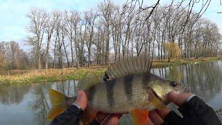 Рыбалка под Боком Окунь есть и Клюет