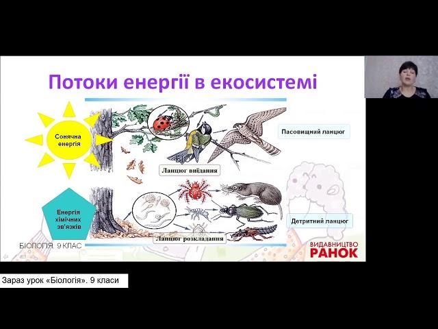 9 клас. Біологія. Харчові зв'язки, потоки енергії та колообіг речовин в екосистемах