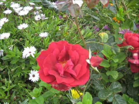 Flores y plantas parques y jardines canet d 39 en berenguer for Parques y jardines