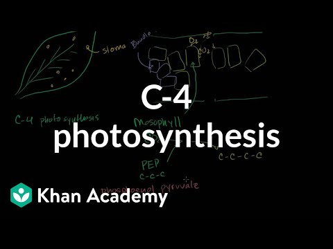 C-4 Photosynthesis