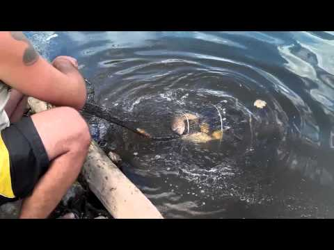 краматорск рыбалка море