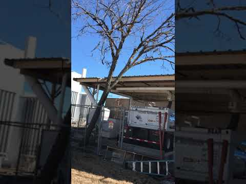 tree-removal-in-mckinney,-melissa,-anna,-princeton-and-most-of-collin-county