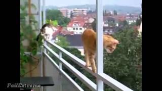 Тупые коты падают, приколы