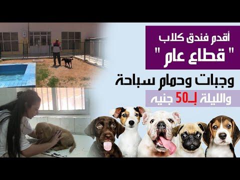 أقدم فندق كلاب عام.. وجبات وحمام سباحة والليلة بـ50 جنيه  - 11:55-2019 / 8 / 18