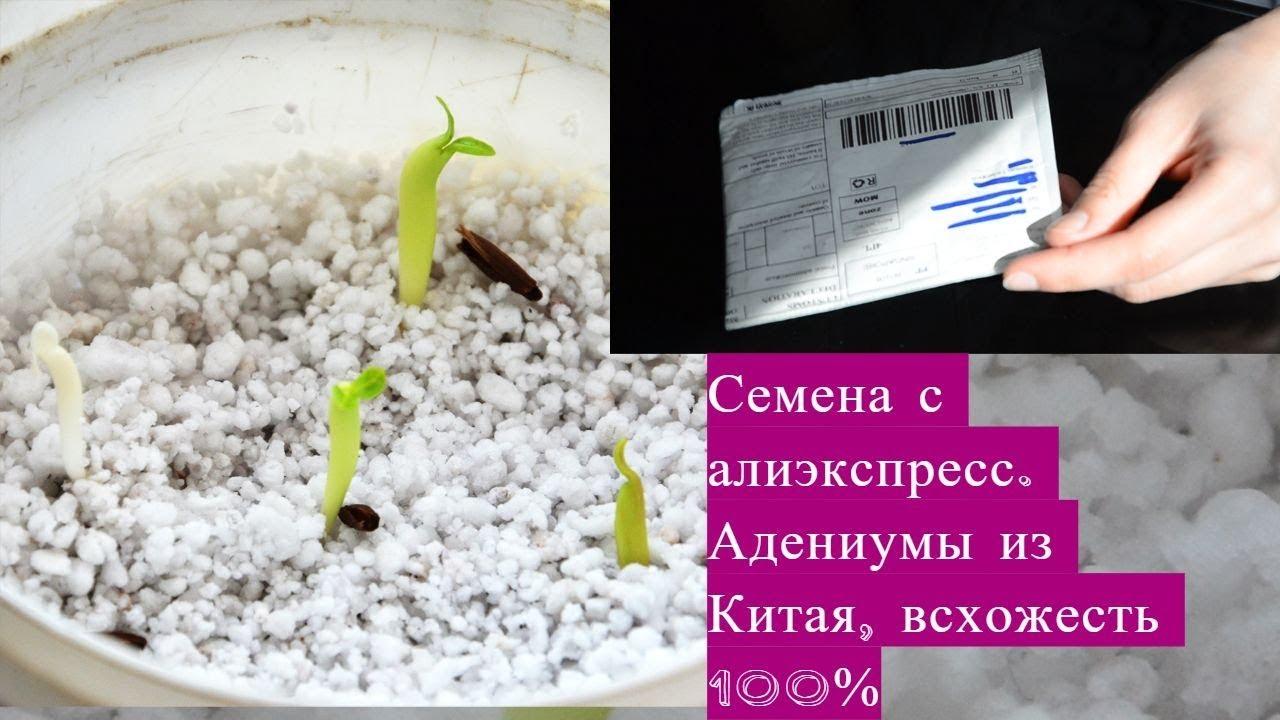 адениумы семена алиэкспресс