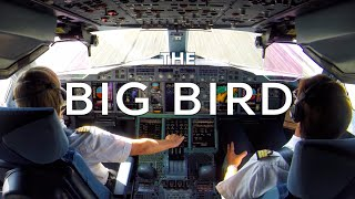 The Big Bird