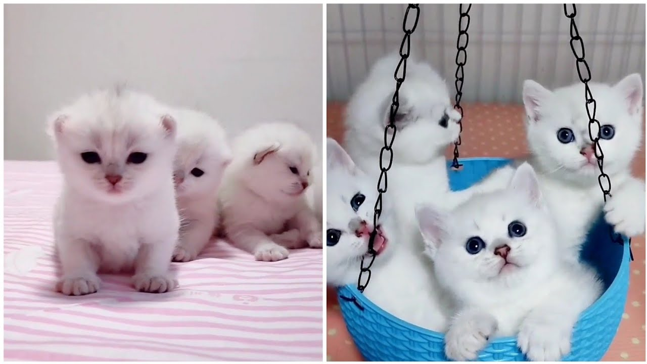 Beautiful video kittens So cute very  lovely and adorable kitten so beautiful 😻😻 love so much