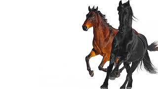 Lil Nas X - Old Town Road (feat. Billy Ray Cyrus) [Remix] video thumbnail