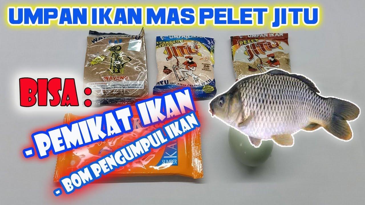 Umpan Ikan Mas Pelet Jitu Pemikat Ikan Mas Bom Pengumpul Youtube