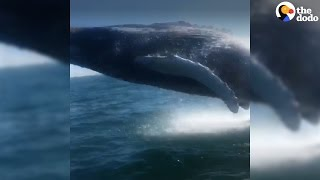 Whale Surprises Family With A Huge Jump Right By Their Boat