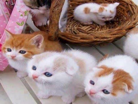 Lovely Cat Wallpaper Cat Wallpaper Downloads Youtube
