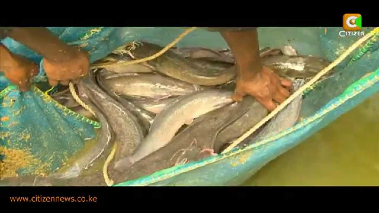 jordan shoes how it's made youtube fish karimeen farming 783