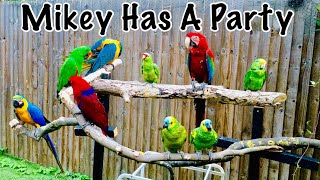 Parrot Party Play Dates & Fly Day    Mikey The Macaw