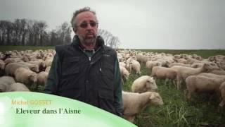 Terres de France - Elever et vivre des brebis sur une exploitation céréalière