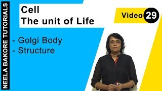 Cell - The Unit of Life - Golgi Body - Structure