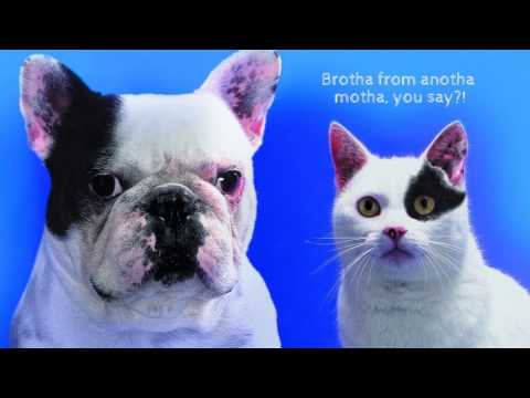 Cats AND Dogs or Cats VS Dogs: Immense Love or Genuine Antipathy?