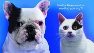 Cats AND Dogs or Cats VS Dogs: Immense Love or Genuine Antipathy? thumbnail