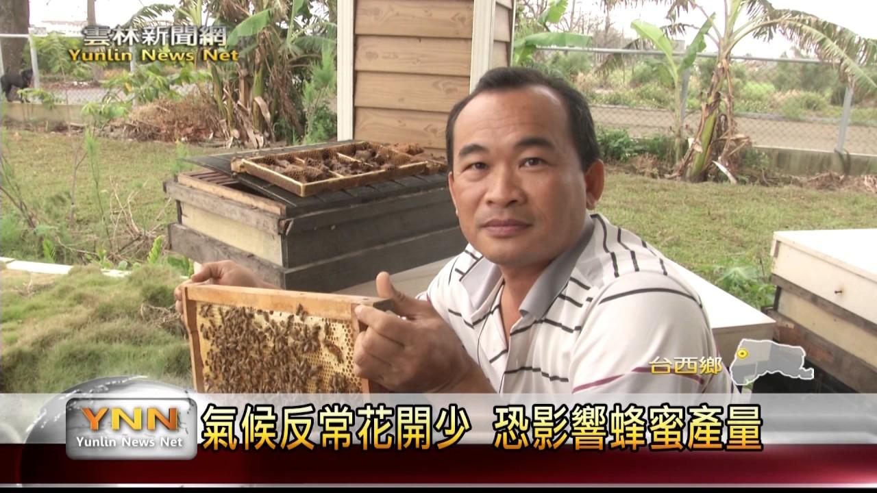 雲林新聞網-臺西天氣多變化蜂蜜減產 - YouTube