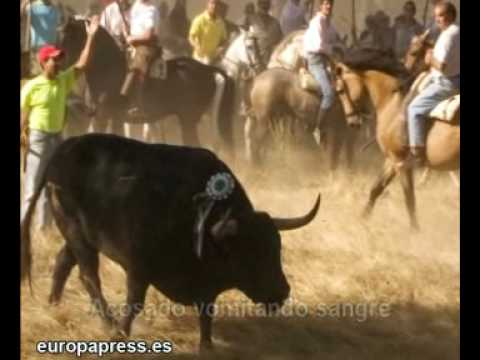 El refugio vive el terror en Tordesillas