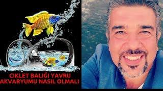 CiKLET BALıĞı ÜRETiM AKVARYUMU NASıL OLMALı(Evde Ciklet Üretimi Yavru Balık Yemi Üretilir)