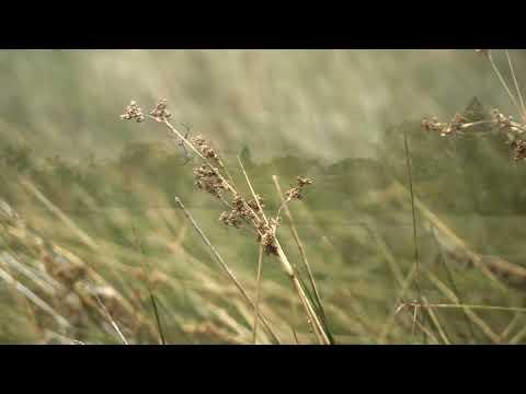Alfred Cove/Attadale, Western Australia