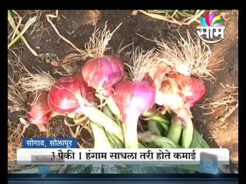 #Agrowon: Success Story Of Laxman Sarde Of Onion Farming In Solapur