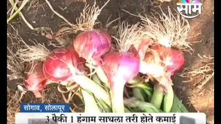 #Agrowon: Success Story of Laxman Sarde of Onion Farming in Solapur