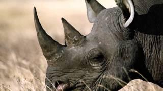 Zwierzęta Afryki-Odgłosy ; Lew, Löwe, Jaguar, Pawian, Pavian, Sęp i inne ...