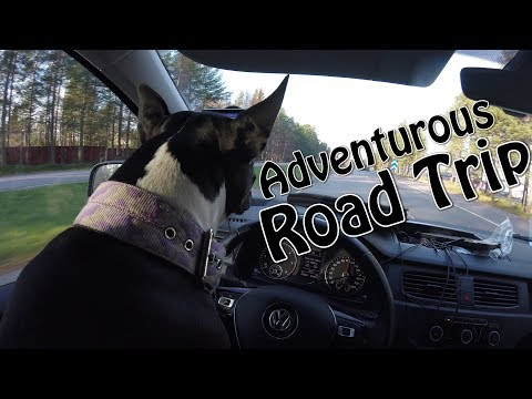 Amstaff: Going on a Road Trip