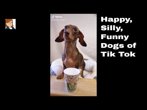 Happy, Silly, Funny Dogs of Tik Tok