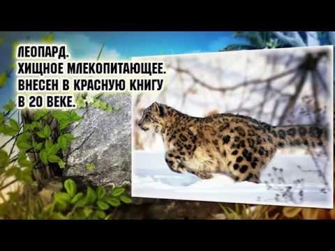 Животный мир Кубани.