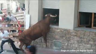 Un toro intenta entrar a una vivienda por la ventana en Milagro (Navarra)