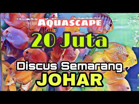 pasar-ikan-hias-semarang- -pasar-johar- -jual-ikan-hias-semarang.-#ikanhias-#aquascape-#review