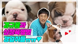 [My Little Television] 마이 리틀 텔레비전 - Lee Gyeonggyu, with a cute puppy  20161126