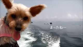 北陸のハワイと呼ばれてる無人島にはお船でいくのよ.