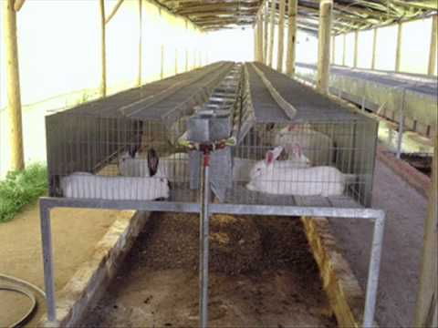Instalaciones para conejos youtube for Galpon de madera para jardin