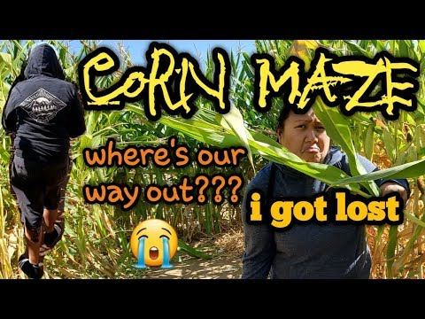CORN MAZE | BONITA PUMPKIN FARM | PUMPKIN PATCH
