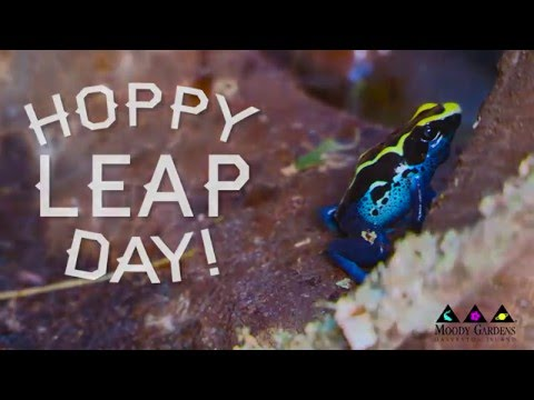 Leap Day - Moody Gardens