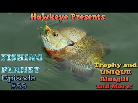 Fishing Planet - Ep. #55: Trophy and  UNIQUE Bluegill and More! Missouri Hotspot!