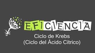 CICLO DE KREBS. Ciclo del Ácido Cítrico o Ciclo de los Ácidos Tricarboxílicos.