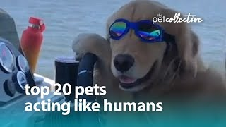 Best Pets of the Year: Top 20 Pets Acting Like Humans | The Pet Collective