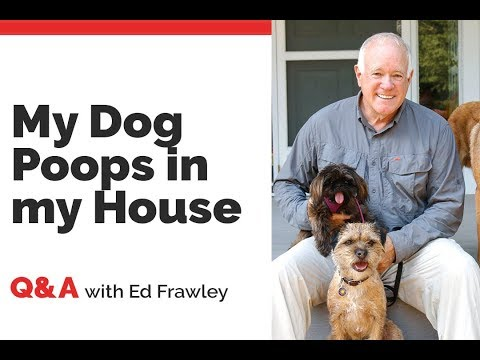 q&a---help!-my-dog-poops-in-my-house!