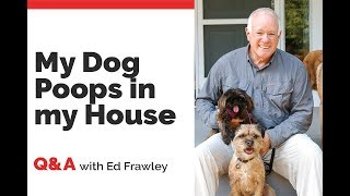 Q&A on a Dog that Poops in the House