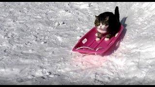 そりとねこ。The sled and Maru.